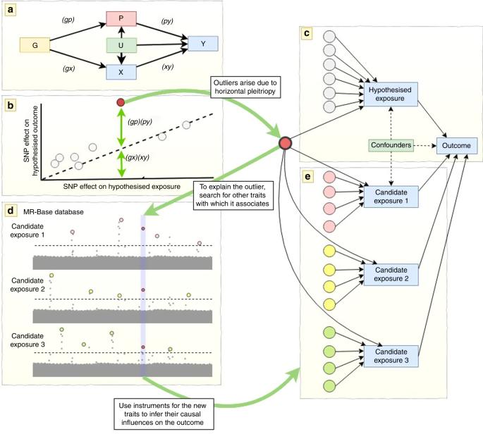 Exploiting horizontal pleiotropy to search for causal pathways within a Mendelian randomization framework