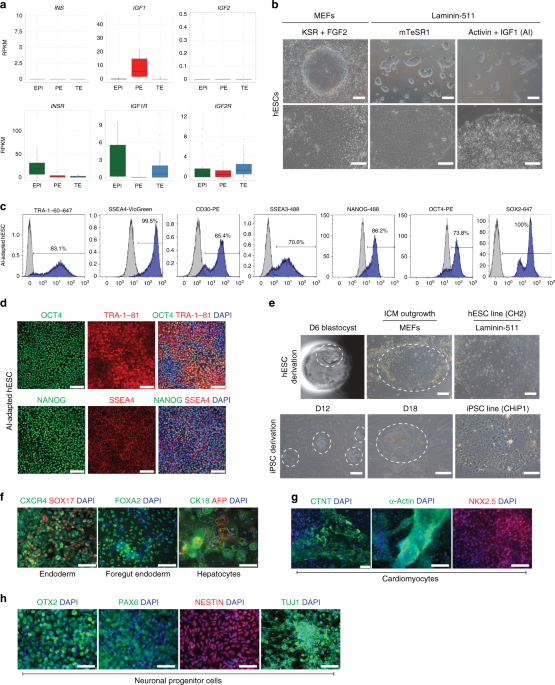 IGF1-mediated human embryonic stem cell self-renewal recapitulates the embryonic niche