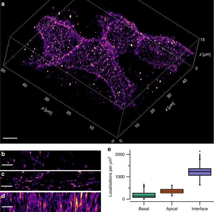 Whole-cell imaging of plasma membrane receptors by 3D lattice light-sheet dSTORM