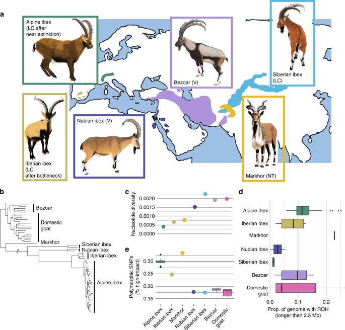 Purging of highly deleterious mutations through severe bottlenecks in Alpine ibex