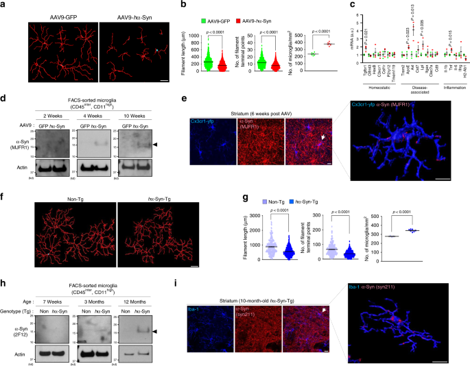 Microglia clear neuron-released α-synuclein via selective autophagy and prevent neurodegeneration