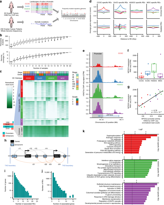 Non Coding Somatic Mutations Converge On The Pax8 Pathway In Ovarian Cancer Nature Communications