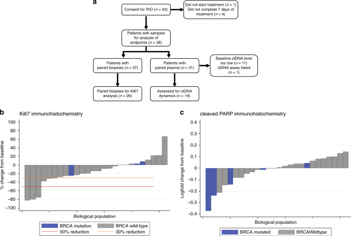 Homologous recombination DNA repair deficiency and PARP inhibition activity in primary triple negative breast cancer