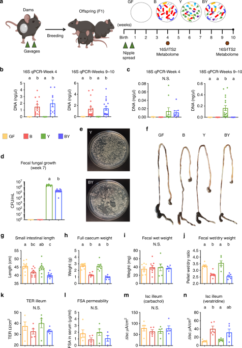 Intestinal fungi are causally implicated in microbiome assembly and immune development in mice