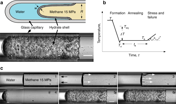 Contactless probing of polycrystalline methane hydrate at pore scale suggests weaker tensile properties than thought