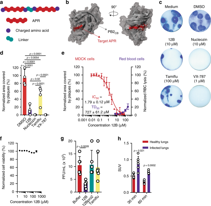 Reverse engineering synthetic antiviral amyloids