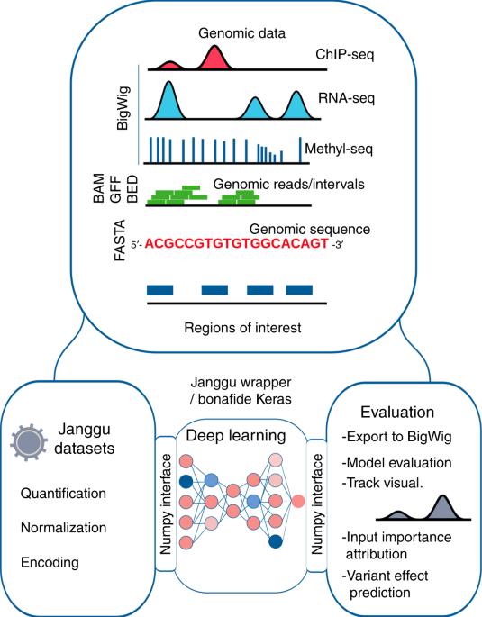 Deep learning for genomics using Janggu