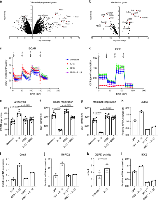 LDHA-mediated ROS generation in chondrocytes is a potential therapeutic target for osteoarthritis