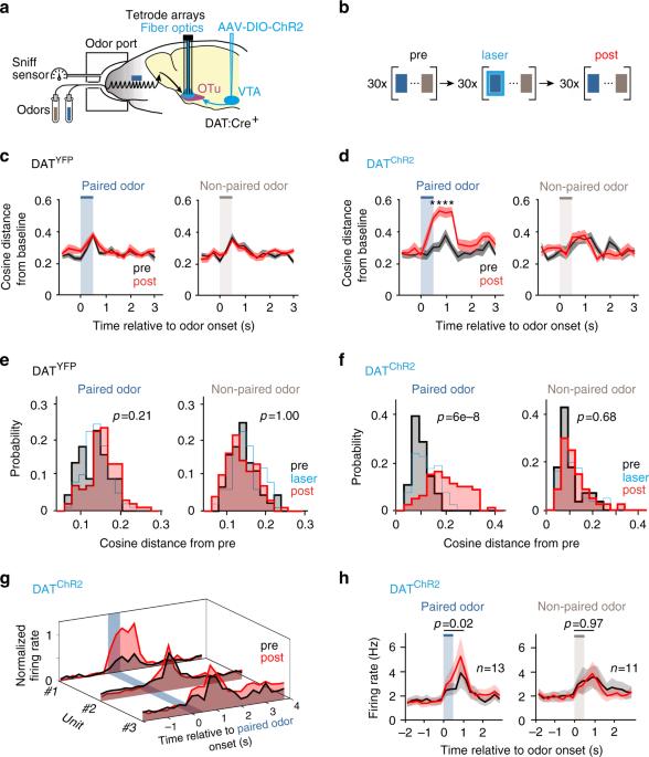 nature.com - Phasic dopamine reinforces distinct striatal stimulus encoding in the olfactory tubercle driving dopaminergic reward prediction