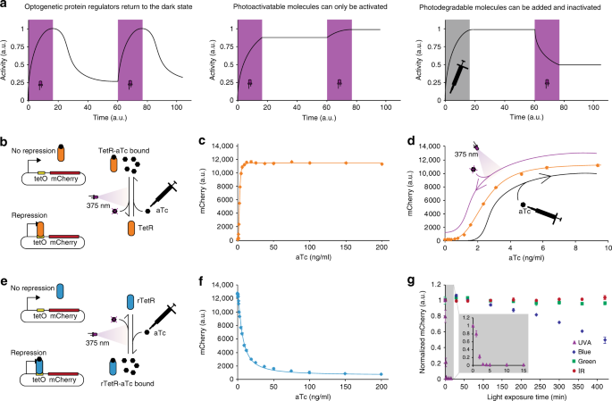 Exploiting natural chemical photosensitivity of anhydrotetracycline and tetracycline for dynamic and setpoint chemo-optogenetic control