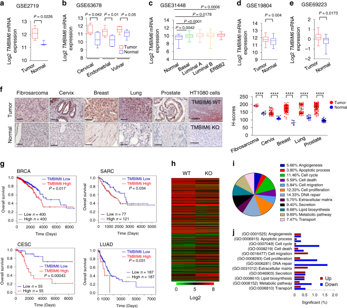 TMBIM6/BI-1 contributes to cancer progression through assembly with mTORC2 and AKT activation