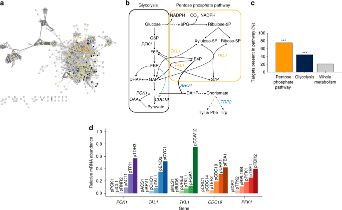 Combining mechanistic and machine learning models for predictive engineering and optimization of tryptophan metabolism
