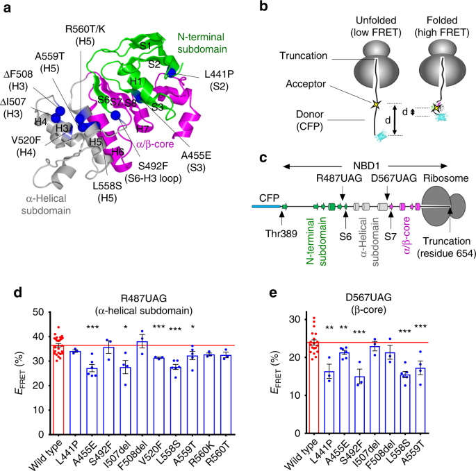 CFTR trafficking mutations disrupt cotranslational protein folding by targeting biosynthetic intermediates
