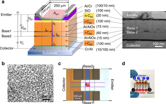 Vertical organic permeable dual-base transistors for logic circuits
