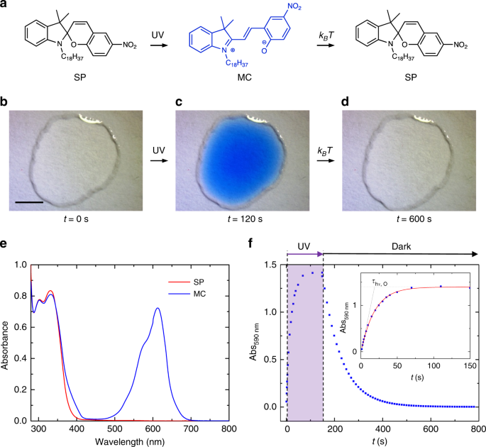Graphene transistors for real-time monitoring molecular self-assembly dynamics