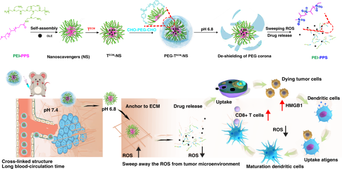Targeted Scavenging Of Extracellular Ros Relieves Suppressive Immunogenic Cell Death Nature Communications