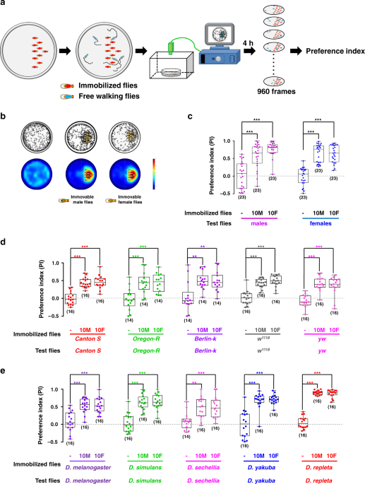 Social attraction in Drosophila is regulated by the mushroom body and serotonergic system
