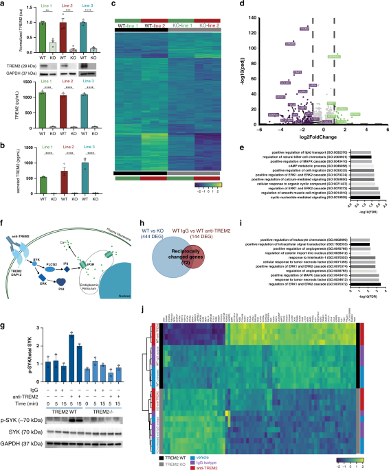 Gene expression and functional deficits underlie TREM2-knockout microglia responses in human models of Alzheimer's disease