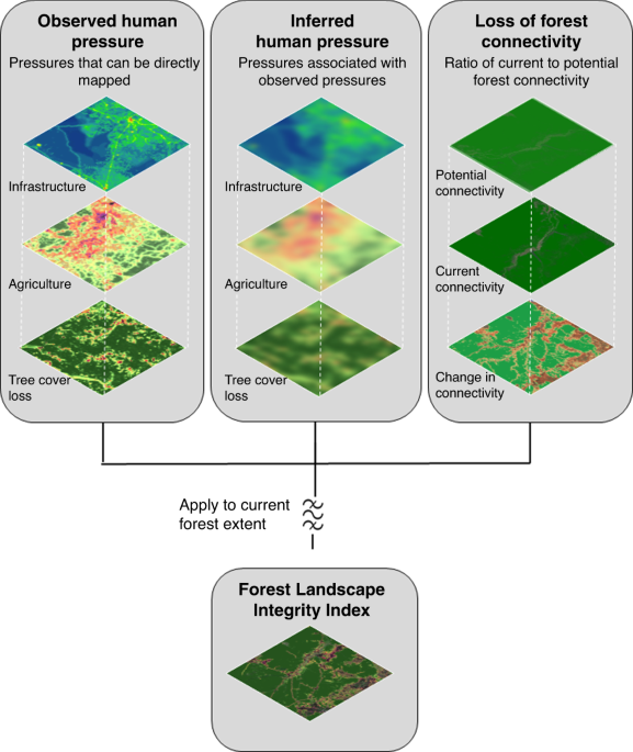 Anthropogenic modification of forests means only 40% of remaining forests have high ecosystem integrity