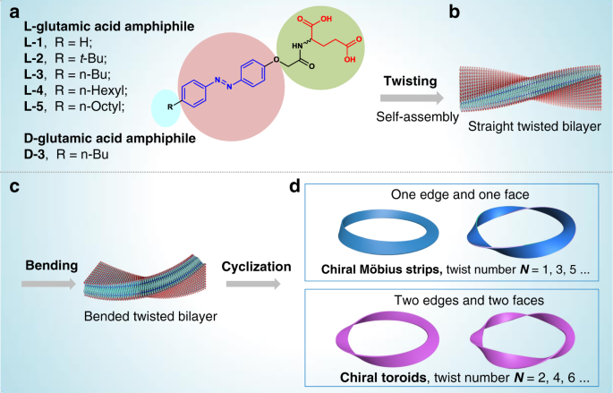 Self-assembled Möbius strips with controlled helicity