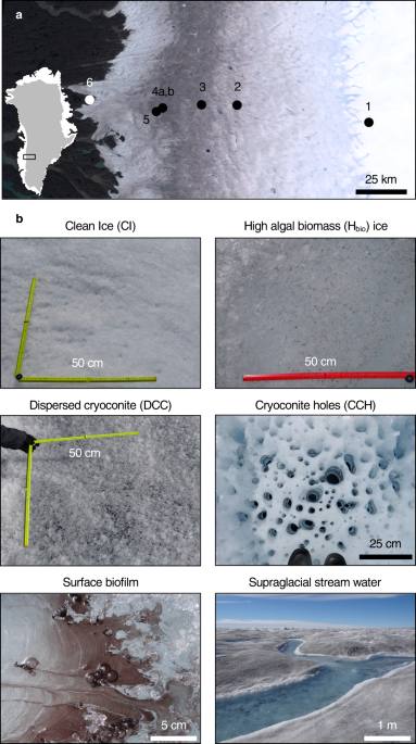 Mineral phosphorus drives glacier algal blooms on the Greenland Ice Sheet