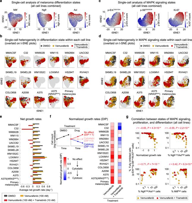 Epigenetic modulation reveals differentiation state specificity of oncogene addiction