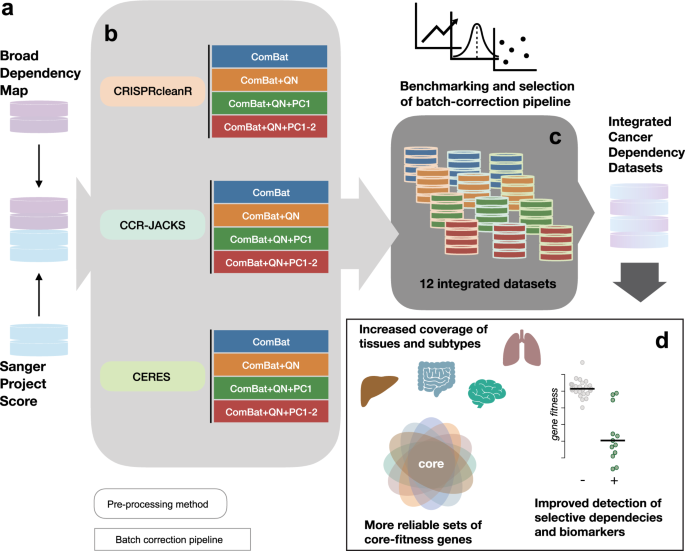 Integrated cross-study datasets of genetic dependencies in cancer