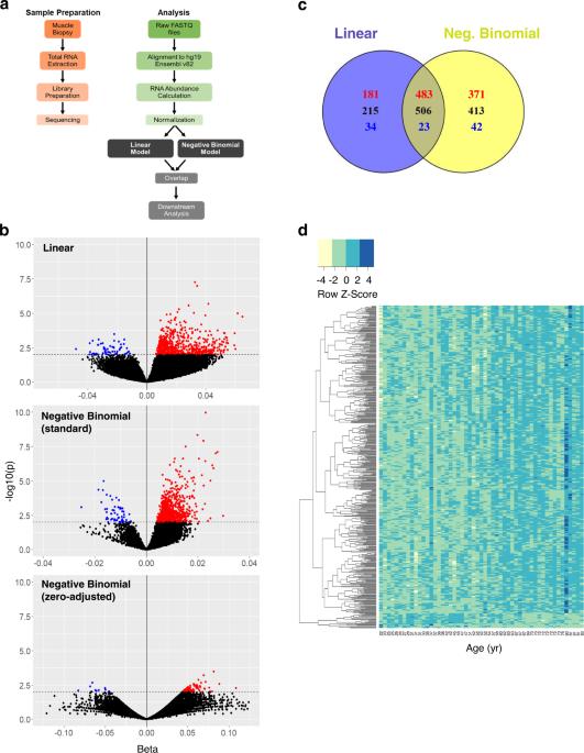 Skeletal muscle transcriptome in healthy aging