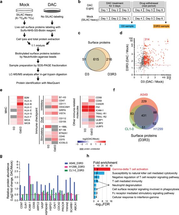 Epigenetic modulation of immune synaptic-cytoskeletal networks potentiates γδ T cell-mediated cytotoxicity in lung cancer