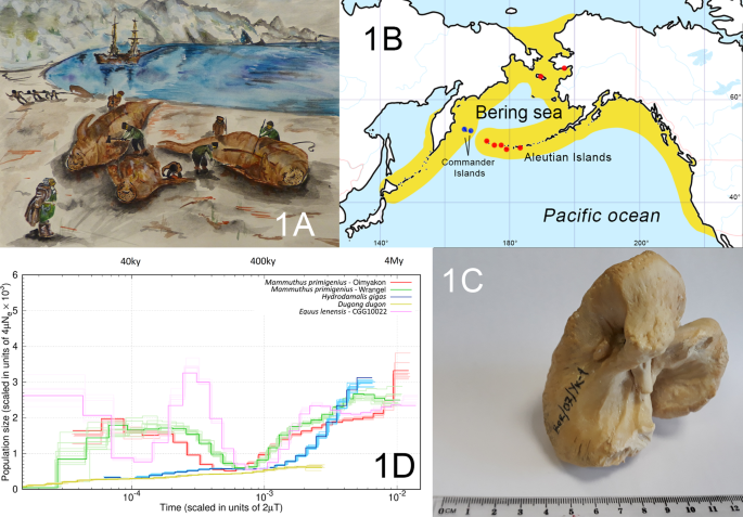 Steller's sea cow genome suggests this species began going extinct before the arrival of Paleolithic humans