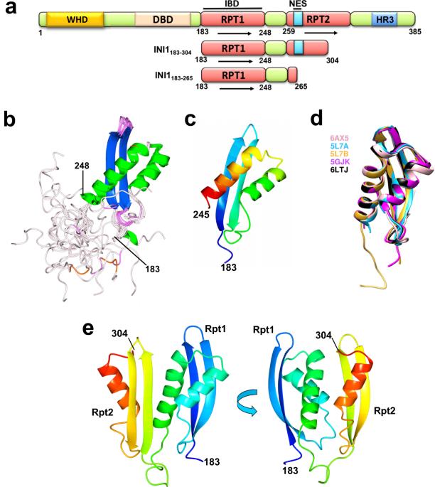 INI1SMARCB1 Rpt1 domain mimics TAR RNA in binding to integrase to facilitate HIV-1 replication