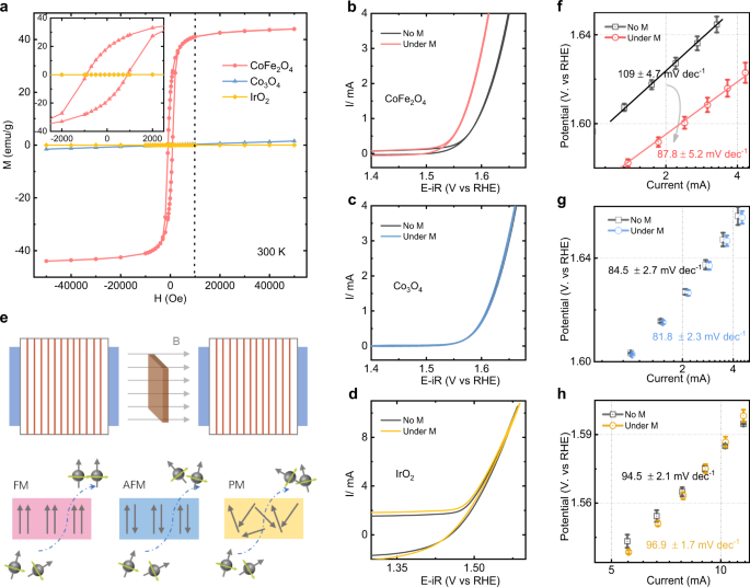 Spin-polarized oxygen evolution reaction under magnetic field