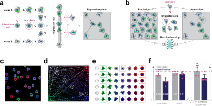 Regression plane concept for analysing continuous cellular processes with machine learning