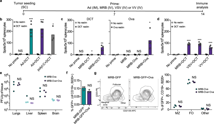 Adjuvant oncolytic virotherapy for personalized anti-cancer vaccination