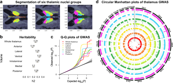 The genetic architecture of the human thalamus and its overlap with ten common brain disorders