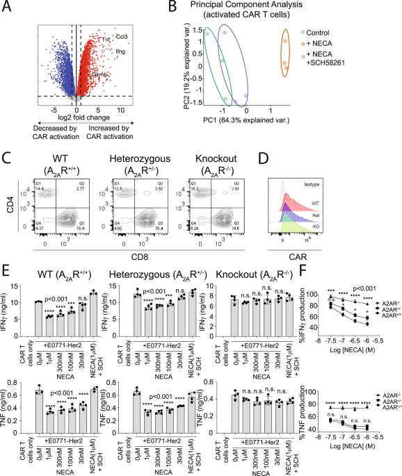 CRISPR/Cas9 mediated deletion of the adenosine A2A receptor enhances CAR T cell efficacy