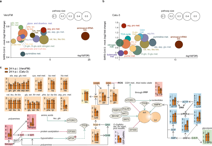 SARS-CoV-2-mediated dysregulation of metabolism and autophagy uncovers host-targeting antivirals