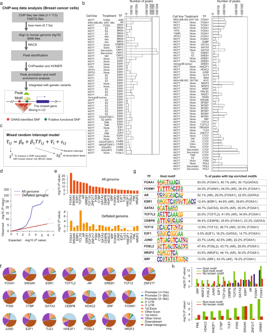 Genetic variations of DNA bindings of FOXA1 and co-factors in breast cancer susceptibility - Nature Communications