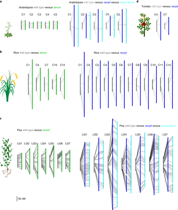 Unleashing meiotic crossovers in crops | Nature Plants