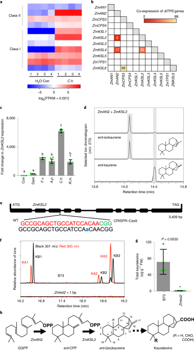 Multiple genes recruited from hormone pathways parion ... on