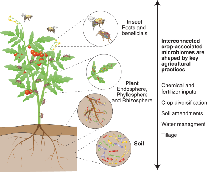 Emerging strategies for precision microbiome management in diverse agroecosystems