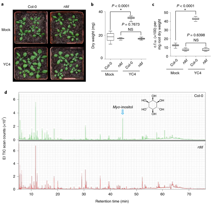 DNA demethylases are required for myo-inositol-mediated mutualism between plants and beneficial rhizobacteria