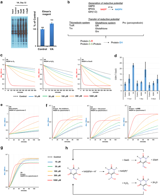 New drugs for pharmacological extension of replicative life