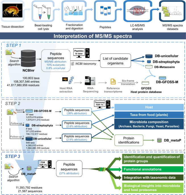 Combining proteogenomics and metaproteomics for deep taxonomic and functional characterization of microbiomes from a non-sequenced host