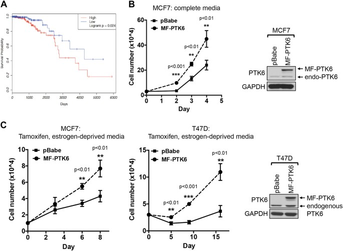 PTK6 regulates growth and survival of endocrine therapy