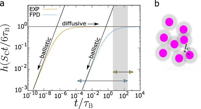 Numerical prediction of colloidal phase separation by direct