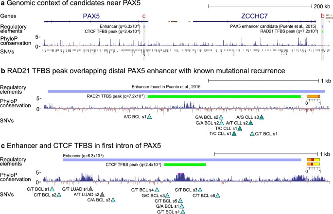 Pan Cancer Screen For Mutations In Non Coding Elements With