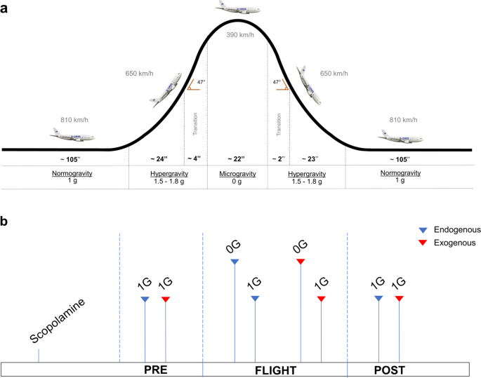 Zero gravity induced by parabolic flight enhances automatic capture and weakens voluntary maintenance of visuospatial attention - npj Microgravity
