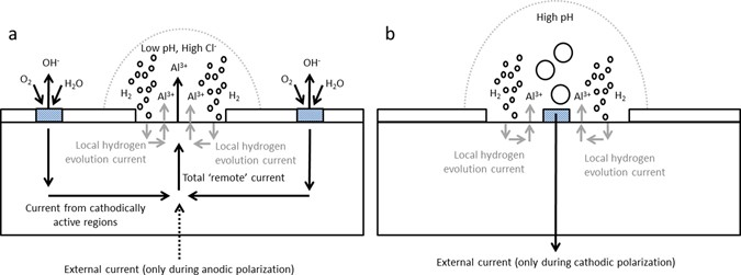 The contribution of hydrogen evolution processes during corrosion fig 4 ccuart Choice Image