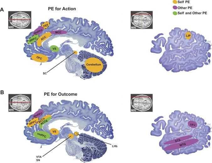 Brain Representations Of Social >> Social Learning Through Prediction Error In The Brain Npj Science